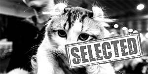 Veni Vidi Mici - il gatto più bello alla Fiera di Roma