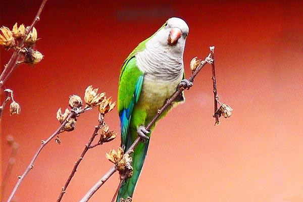 Museo-di-Zoologia-Roma-Diverso-per-Natura